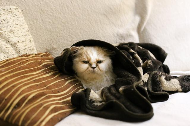 kočka v teple
